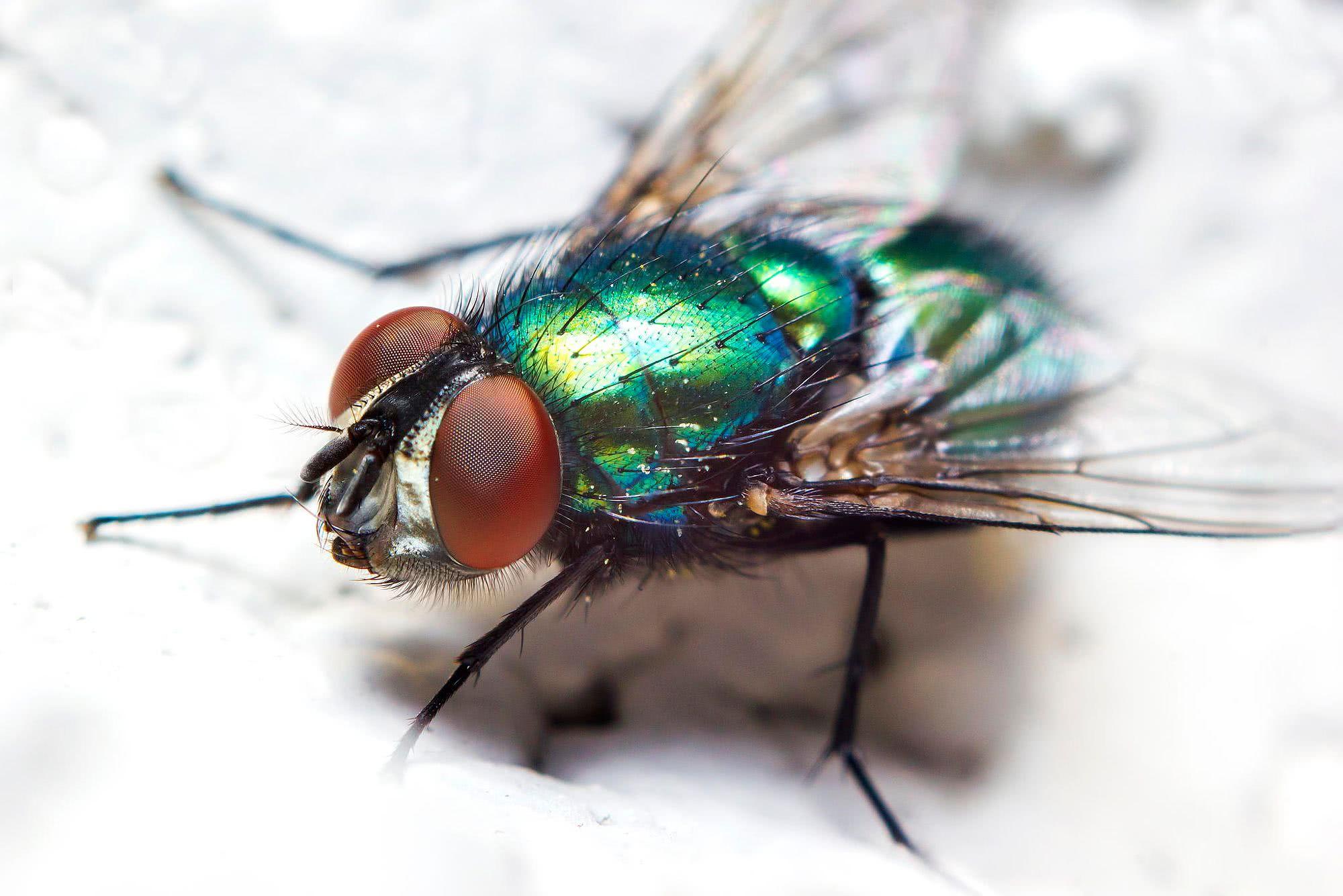 Как сделать чтобы мухи не садились 937