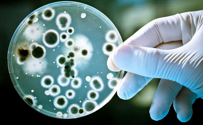 Биологи из Японии и США смогли оживить древних микробов